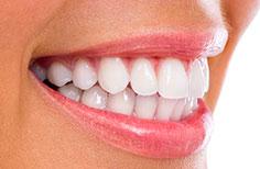 women tooth model
